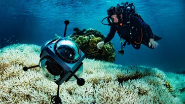 Coral bleaching returns to the Great Barrier Reef: Richard Fitzpatrick surveys the toll near Cairns.