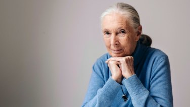 British primatologist, ethologist, and anthropologist Jane Goodall in New York earlier this month to promote the Disneynature film, 'Born in China'.