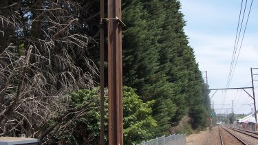 The trees along the rail line as they were before the contractors moved in.