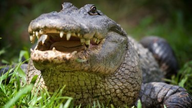 A woman is in a critical condition after the alligator attack in Florida.
