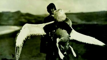 Dr William Ingram, medical officer and biologist, with a young wandering albatross on the Crozet Islands.