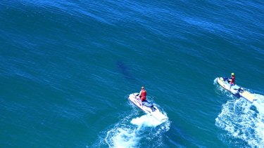 A shark was spotted at Lighthouse Beach, after surfer Cooper Allen was bitten on Monday morning.