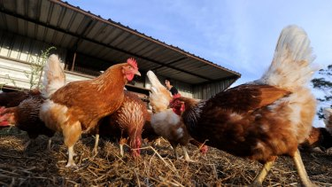 """Both consumers and businesses have long been unsure about what """"free range"""" means."""