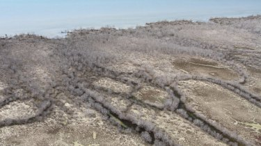 7000 hectares of mangrove trees have died back in the Gulf of Carpentaria sparking fears of far reaching repercussions.