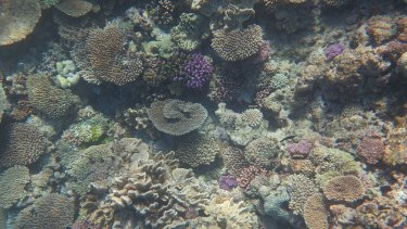 Coral bleaching could be a threat on the Great Barrier Reef in the next few weeks.