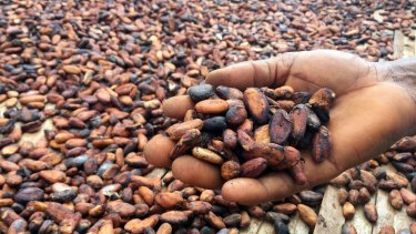 A cocoa farmer from Yaokouakoukro village inspects beans drying in the sun.