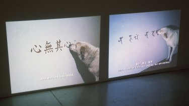 A still from Peng Hung-chih's video series Canine Monk.