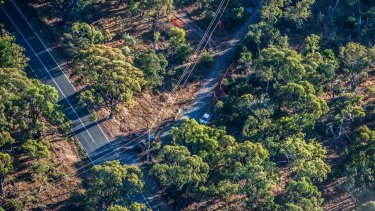 Trees hanging over powerlines in Canberra.