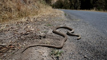 Anglers need to be on alert for snakes.