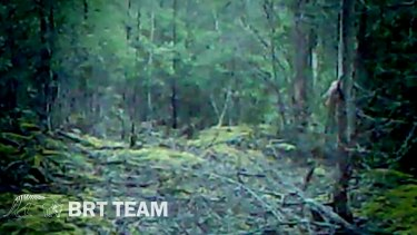 Is there a tiger in there? A still from footage released by the men.