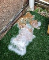 Raw sewage leaking into Mr Gibson's backyard.