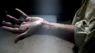 A lab worker exposes his arm to Aedes Aegypti mosquitoes, responsible for the spread of the Zika virus, during testing in the epidemiology lab at the Roosevelt Hospital in Guatemala City, Guatemala.