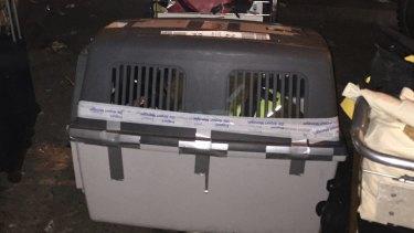 German sniffer dog arrives at Tribhuvan International Airport, Kathmandu.