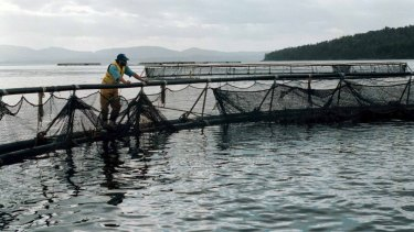 Sea lice has hit salmon production in Norway – the global leader – hard.