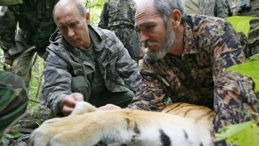 Vladimir Putin, assisted by a scientist, fixing a satellite transmitter onto a tiger during his visit to the Ussuriysky forest reserve in 2008.