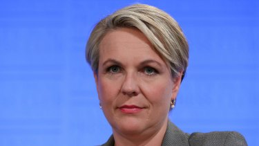 Tanya Plibersek says the Greens of being on the search for 'righteous indignation'.