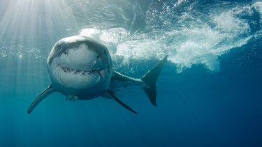 A fear of sharks is called what ...?