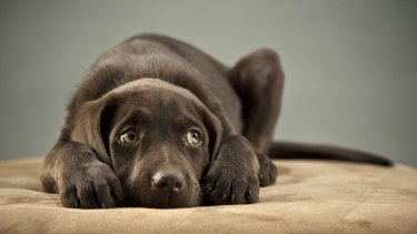 """Aw, just look at that face. They call it """"puppy love"""" for a very good reason, as Monica Dux has discovered."""