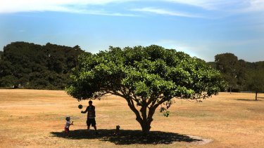 A man and a child shelter in the shade at Sydney's Centennial Park on Friday.