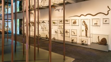 The exhibition revived the taxidermy department at the museum.