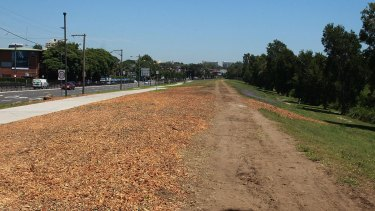The barren land on Alison Road in Randwick where trees have been cut to make way for the light rail.