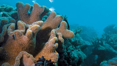 The Great Barrier Reef Marine Park has been protected from dredge spoil.