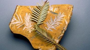 Fossilised Agathis jurassica leaves alongside modern Wollemi pine.