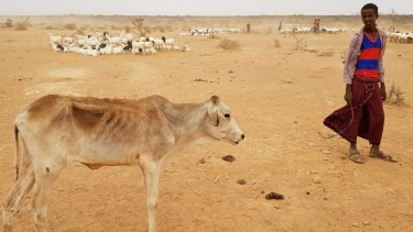 Some blamed raids in the Somali region of Ethiopia, pictured here, for the violence.