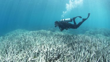 A UQ researcher says damage to coral has reached down to new depths.