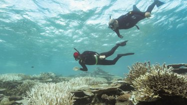 Three-quarters of the Barrier Reef is alive, says the Great Barrier Reef Marine Park Authority.
