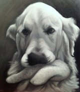 Mr Gallagher's first oil painting of Ozzie, his golden retriever.