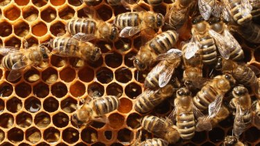 Police are now working with Apiculture New Zealand and the Ministry of Primary Industry to improve investigative techniques over beehive thefts.
