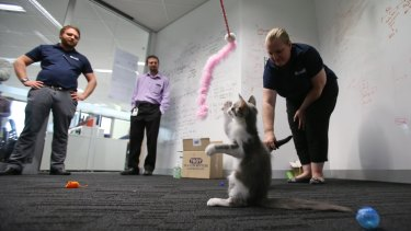 Uber has teamed up with the Animal Welfare League to raise awareness of hundreds of rescue cats in need of homes.