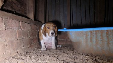 """The only water available to dogs on the site was observed as being """"filthy"""" and """"green""""."""
