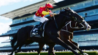 Hard worker: Auvray ridden by Glyn Schofield wins the Randwick Mayors Cup.