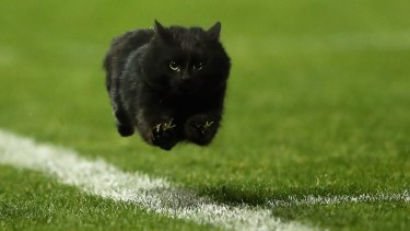 A black cat enters the field of play during the round 18 NRL match between the Penrith Panthers and the Cronulla Sharks at Pepper Stadium on Sunday night.