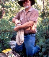 Dick Braithwaite trapping animals for research in Kakadu.