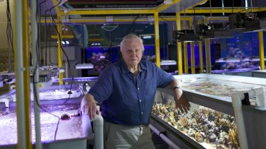 David Attenborough with reef tanks.