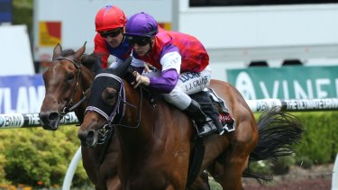 Entering group company:  Jockey Lester Grace and Slots will tackle the group 2 Breeders Classic.