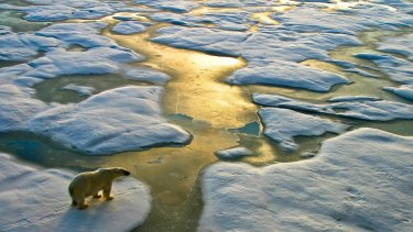 Polar bears get much of the media attention about how climate change is affecting species - but the struggles extend far wider, scientists say.