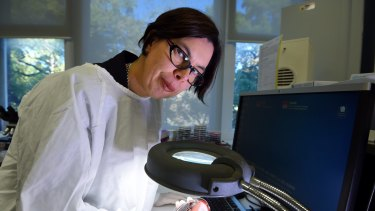 Rebecca Davis, an infectious disease physician at RPA hospital in Sydney, used genome mapping to trace a potentially deadly  outbreak in the neonatal unit to its source.
