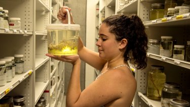 Claire Rowe, a marine biologist at the Australian Museum, is researching the spread of upside-down jellyfish in NSW waters.