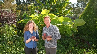 Horticulturist Dr Chris Williams and student-artist Sophie Lamond with the crop.