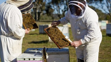 Neil Bingley and his son Brett work on hives near Queanbeyan.