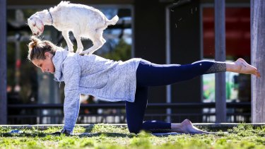 Owner of Elite Therapies and Body Balance Inge Sildnik enjoys relaxing yoga with baby goats.