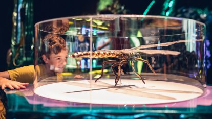 Bug Lab: Giant insects and spiders from Weta Workshop invade Melbourne Museum