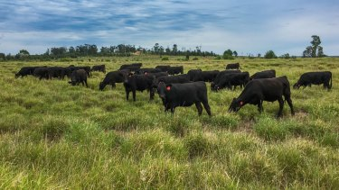 Australian farmers are concerned about the freeze on some Australian beef exports to China.