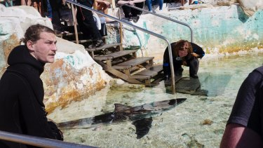 Staff from Manly Sea Life Sanctuary eventually transported the shark to a nearby rock pool.