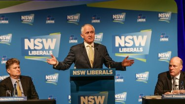 NSW acting Liberal Party president Trent Zimmerman has been selected to stand in Joe Hockey's former seat.
