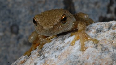 Spotted tree frog.